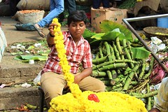 On the job (bluelotus92) Tags: flowers india flower child market flowervendor karnataka mysore chrysanthemum flowerseller yellowchrysanthemum mysuru devarajursmarket childvendor devarajaursmarket