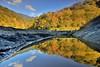 秀巒~楓之谷~  The Valley Of Maple (Shang-fu Dai) Tags: 台灣 taiwan 新竹 尖石 秀巒 楓葉 楓之谷 maple formosa nikon d800e afs1635mmf4 樹 戶外 岩層