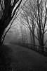 Rauchiger Weg zu den Sternen (S. Boblest) Tags: nebel weg pfad path way nature natur laub tree baum fog foggy blackandwhite insulaner berlin schwarzweis monochrom monochrome bnw bw sw
