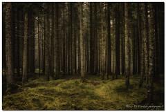 "Woods (""Deca"") Tags: dolomiti dolomites montagna mountain sanmartinodicastrozza siror boschi woods alberi trees estate summer agosto august hdr"