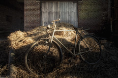 I want to ride it where i like (Dennis van Dijk) Tags: abandoned forgotten decay urbex urban exploration lost found queen bicycle hay stack song rust dust farm beauty light fantastic fabulous shadow tour france yellow jersey