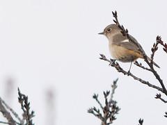 161211_GX7_1450915 (kuad9) Tags: bird