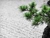 Stone Waves (campra) Tags: japan sendai miyagi matsushima entsuin 円通寺 date stone garden zen needle green