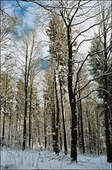 Winterspaziergang am Katzenbuckel (2) (Thaddl) Tags: germany nikonf100 nikonafnikkor3570mm13345 3570mmf3345af kodakcolorplus200 heliopandigitalpolcircular polfilter polarizer polarisationsfilter reflectaproscan7200 silverfast6aistudio silverfast6hdrstudio katzenbuckel waldkatzenbach waldbrunn wald forest winter schnee snow bäume trees himmel sky fineweather schöneswetter film analog analogue badenwürttemberg neckarodenwald baden