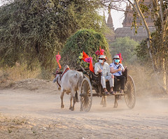 Ox cart carrying tourists on dusty road (phuong.sg@gmail.com) Tags: archeology architecture art asia asian attraction bagan buddhism buddhist burma burmese carriage cart culture dirt exploring heritage horse landmark myanmar pagoda religion religious revered road serene sightseeing southeast stupas temple theravada tour tourism tourist tourists tradition traditional tranquil travel wagon worship