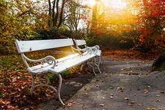 Autumn (DaLiu_) Tags: fall autumn season life park tranquil bench leaf garden outdoors tree color yellow object rustic day seat backgrounds sunlight meadow leisure foliage nobody natural activity green silence red brown deciduous bright orange grass solitude september wood october furniture forest plant beauty empty trunk footpath branch nature idyllic landscape relaxation