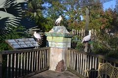 Birds 15/12/16 - 4 (s.kosoris) Tags: skosoris nikond3100 d3100 nikon tampazoo tampa animal bird birds