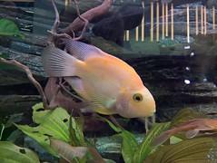 WP_20161226_14_40_39_Rich (vale 83) Tags: fish microsoft lumia 550 friends lunaphoto flickrcolour wpphoto wearejuxt autofocus coloursplosion colourartaward beautifulexpression yourbestoftoday