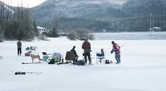 _TRW7474 Twin Lakes (terrificphotos) Tags: juneauaalaska twinlakes dogs frost trees raven evergreen icecrystals hockey