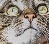 A cat with some range (IrishRedBeard) Tags: 2017 nj usa westberlin northamerica animal cat ella pets