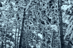 04 (Andrei Tuţu) Tags: winter snow story cold wintery walk mountains ambient fantasy magic white black blue