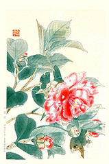 Camellia (Japanese Flower and Bird Art) Tags: flower camellia japonica theaceae suiko fukuda nihonga woodblock print japan japanese art readercollection
