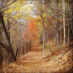 fall 2017c (Quiddity_Way) Tags: forest path leaves woods fall peaceful nature