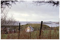 Byrkneskvintetten nr 5 (.kristian) Tags: byrknesøy byrknes gulen ytre sogn nikon fm3a nikkor d norway og fjordane natur gress fuji superia 200 analog film 50mm f14
