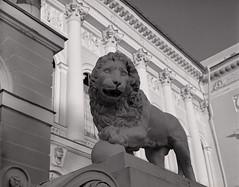 Lion greats you (suxarik) Tags: mamiya 645 6x45 120 film 645afd af sekor mamiyasekor ilford ilfordhp5 hp5 diy selfdeveloped bw blackandwhite rodinal monochrome scanned imacon imaconflextightphoto mf medium mediumformat analog filmisnotdead architecture monument sculpture lion winter snow