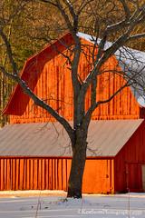Red ... barn (Ken Scott) Tags: barn baretree red leelanau michigan usa 2017 february winter 45thparallel hdr kenscott kenscottphotography kenscottphotographycom freshwater greatlakes lakemichigan sbdnl sleepingbeardunenationallakeshore voted mostbeautifulplaceinamerica