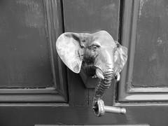 Elephant door knocker (duncan) Tags: elephantdoorknocker elephant doorknocker cool 3000v120f