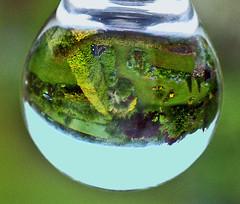 garden refraction (algo) Tags: green gardens photography topf50 bravo topv1111 topv999 refraction algo refractions gtaggroup