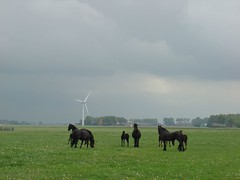 Friese horsies (Sijke Boulogne) Tags: lucht weiland paarden friese