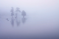 Lake Martin at Sunrise (kathyv) Tags: trees mist lake water fog louisiana martin foggy cypress serene gettyimagescallforartists