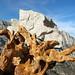 Mt. Whitney Stone on a Stump