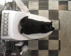 Black & White (pauly...) Tags: white black cat blackcat bathroom gato amiko checkered abigfave