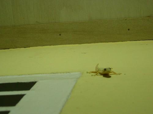 Gecko intentando cazar a Ade