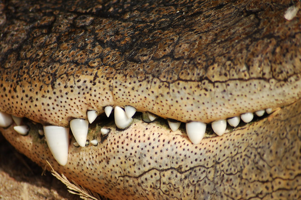 Que grandes dentes tu tens...