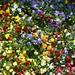 Hockneyized Flowers