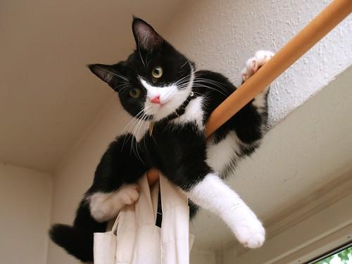 フリー写真素材, 動物, 哺乳類, ネコ科, 猫・ネコ,