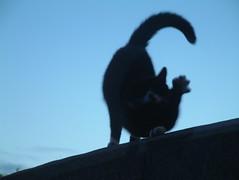 Cat Dance 04