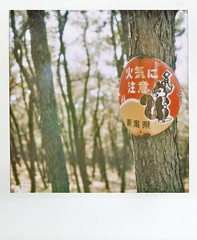 06053 (+yooco+) Tags: wood sign japan forest landscape sx70 japanese squirrel grove inflammable