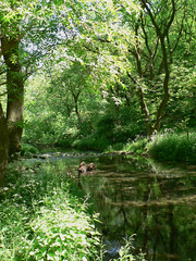 A Perfect Day (Lazy B) Tags: trees reflection green water sunshine june tag3 taggedout river ilovenature nationalpark tag2 tag1 peakdistrict 2006 idyll fz5 lathkilldale rnblathkill