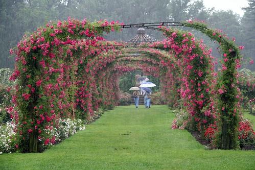 arches in the rain