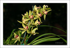 b-4322-orchid-08-07-06-10T (Barbara J H) Tags: flowers aloe orchids grevillea
