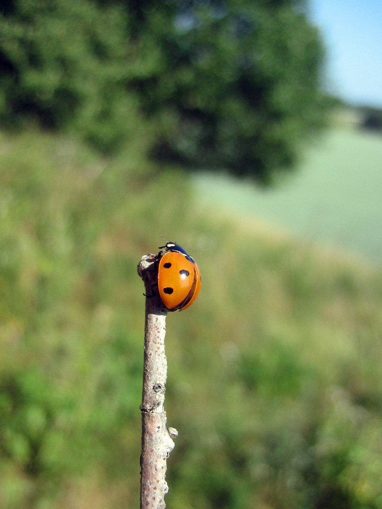 Ladybug on top of the world