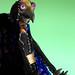 Pájaro basado en los pájaros de beth robinson