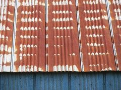 Tin Roof Rusted (Celine Chamberlin) Tags: roof building metal oregon tin rust tinroof metalroof willamettevalley stayton tinroofrusted nondp