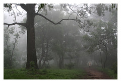 Misty morning (Vivek M.) Tags: bangalore nandihills weekendshoots