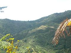 Sudarshanaloka bush walk 3a