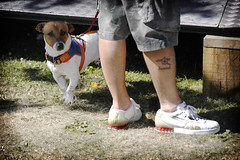 jack and a tat (Baby Skinz) Tags: dog tattoo nikon legs nikond100 trainers jackrussell d100 puma arsenal
