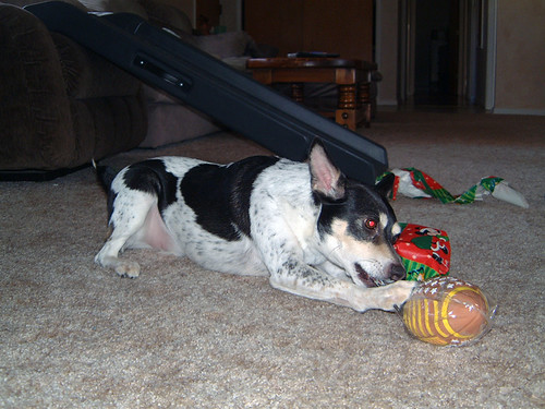 2005-12-25 - DoggieXMas-0019