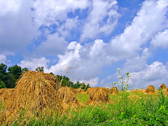 Amish Haystacks (CountryDreaming) Tags: trees ohio summer sky field clouds sunny amish haystacks haystack fields hay amishcountry holmescounty