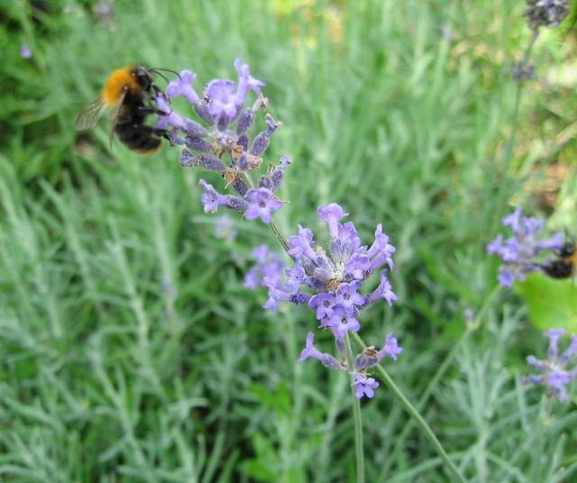 Bee longing