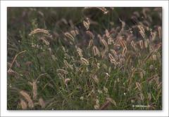 b-2875-longreach-21-05-06-10L (Barbara J H) Tags: grass tress longreach