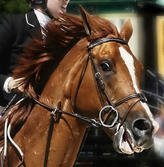 Red Runner (Isabelle Ann) Tags: horse art digital photoshop wow caballo cheval jumping vermont photographer stadium digitalart dorset 100views isabelle jumper hunter cavallo cavalo pferd equine equus paard horseshows hunterjumper mostbeautiful manchestervt dorsetvt equineart vermontsummerfestival isabelleann isabelleanngreen equestrianart hunterjumpers dorsetsummerfestival equinephotographer hunterjumpershows artistichorse isabellegreen equitationart hunterjumperart dorsethorseshow hunterjumperphotography hunterjumprphotographer isabellegreenphotography isabelleannphotography isabelleannhorses mostbeautifulhorses equineartist hunterjumperphotographer hunterjumperphotograhy