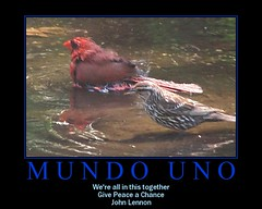 MUNDO UNO (makeupanid) Tags: world fdsflickrtoys war peace interspecies blackribbon malenortherncardinal onebighappyfamily femaleredwingedblackbird mundouno unomotivator communalbathing
