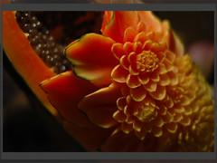 Carved Papaya (Yorick...) Tags: flowers orange fruits wonder thailand asia d70 impermanence chiangmai yorick 50mmf18d renaudvince