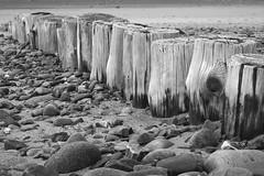 B+W Dunster Beach - Groynes (John Pailing) Tags: wood bw white black beach stone sand groyne dunster groin minehead