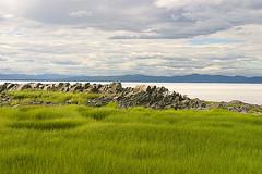 IMG_0661 (simonroy) Tags: grass quebec stlawrenceriver fleuvestlaurent